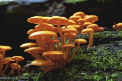 Fungi-forest-screen-adj-6