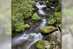 Smokies-stream-w-border-13