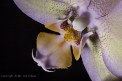 night-orchid-2-stack